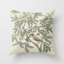 Robert Jacob Gordon - Acacia karroo Hayne or Vachellia karroo - 1777-1786 Throw Pillow