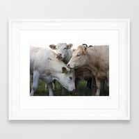 cows Framed Art Prints featuring Cows. by wil-ko