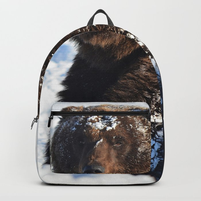 Alaskan Grizzly in Snow Backpack