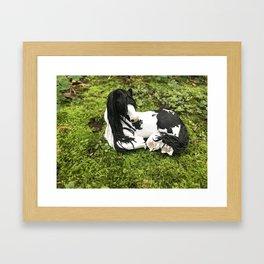 Audrey Gypsy Vanner Horse Framed Art Print