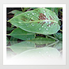 Banana Leaf reflection in the water drops beautiful nature Art Print