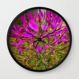 Cleoma flower Wall Clock
