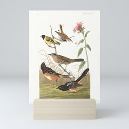 Chestnut-coloured Finch, Black-headed Siskin, Black crown Bunting, Arctic Ground Finch by John Audub Mini Art Print