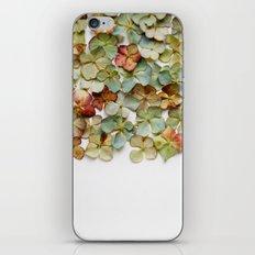 Hydrangea Petals no. 2 iPhone & iPod Skin