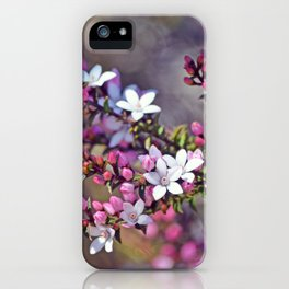 Australian Box Leaf Waxflowers iPhone Case