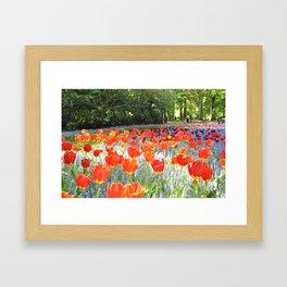 Sunny Tulips Framed Art Print