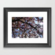 Spring Blossoms I Framed Art Print