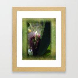 maize -3- Framed Art Print