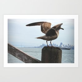 Feathers in the Bay Art Print