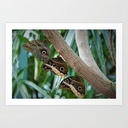 Butterfly Triplets Art Print