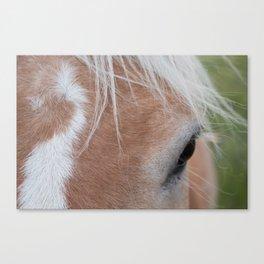 Equine Cowlick Canvas Print