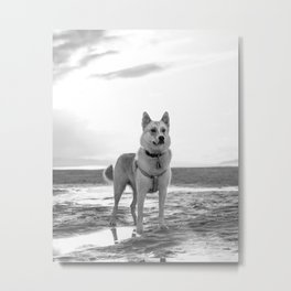 Dog By The Water Metal Print