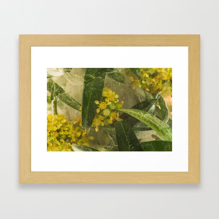 Olive #6 Framed Art Print