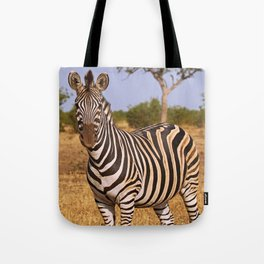 Zebra in Africa, wildlife Tote Bag