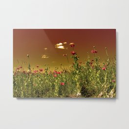 Evening sky over the poppies Metal Print