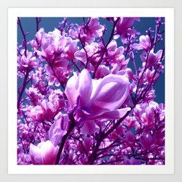 purple magnolia IV Art Print