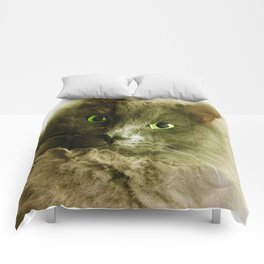 Wake up! Time to feed the Cat! Comforters