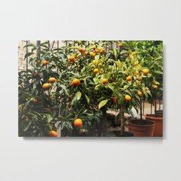 Italian Oranges Metal Print