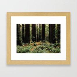 Deer in Redwood Forest Framed Art Print