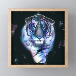 indian tiger Framed Mini Art Print