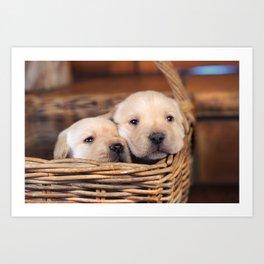Puppies Labrador Retriever Art Print
