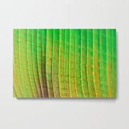 Linear Leaf Metal Print
