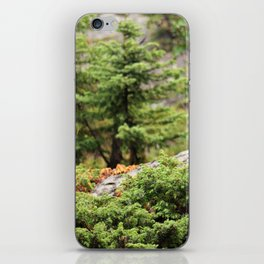 Within the Silent Forest iPhone Skin