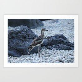 Curlew bird on the beach at Daydream Island Whitsundays Art Print