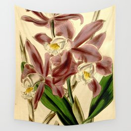 Cattleya intermedia Wall Tapestry