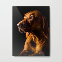Hungarian Vizsla Dog Metal Print