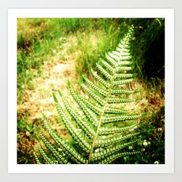 Green Fern Art Print