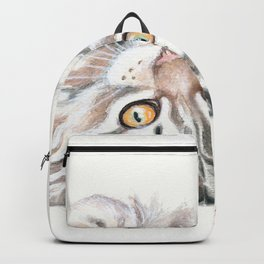 Cute Maine Coon Kitten Playing Backpack