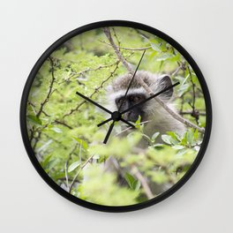 monkey in africa new Wall Clock