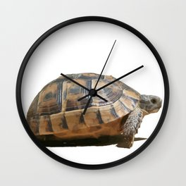 Sideview of A Walking Turkish Tortoise Isolated Wall Clock