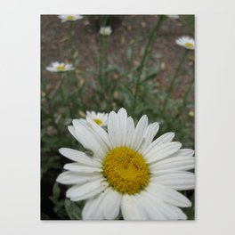 """Best """"daisies"""" of my life Canvas Print"""