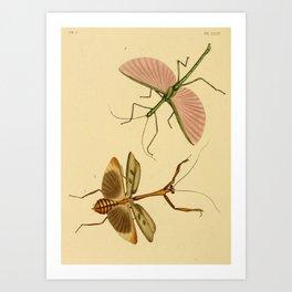 Naturalist Stick Bugs Art Print