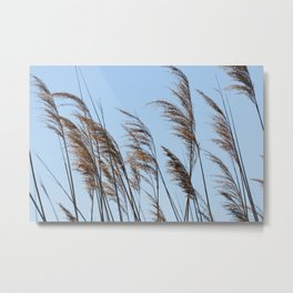 cane  plant in the wind on the shore of the lake Metal Print