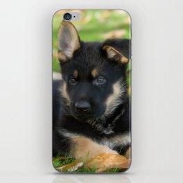 8 weeks old shepherd puppy iPhone Skin