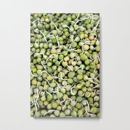 Peas Sprouts Metal Print