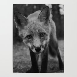 The Fox (Black and White) Poster
