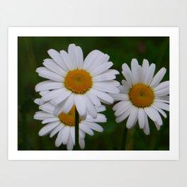 Margarita blomst Art Print