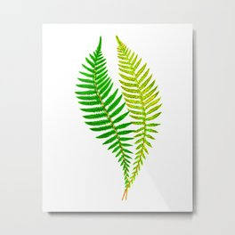 Antique Fern Print No.4 Green Nature Botanical Art Illustration Metal Print