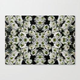 White Alyssum Flowers Mandala Warp Abstract Canvas Print