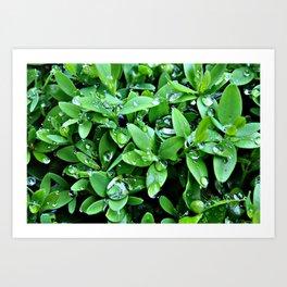 Raindrops on Green Leaves Art Print