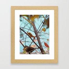 Bird's Eye Framed Art Print