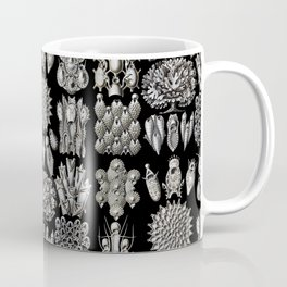 Ernst Haeckel - Scientific Illustration - Bryozoa Coffee Mug