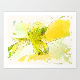Pale Yellow Poinsettia 1 Serene Art Print