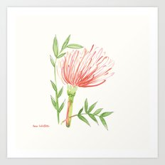 Pin Cushion Flower Art Print