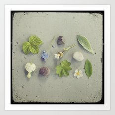 Nature Collected Art Print