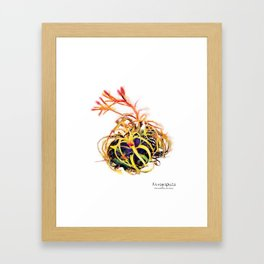 Tillandsia Xerographica Air Plant Watercolor Framed Art Print